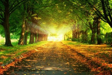 树 道路 小道 落叶 日落 4K风景高端电脑桌面壁纸