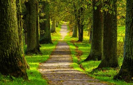 春天 公园 森林 道路 树木 4K风景高端电脑桌面壁纸