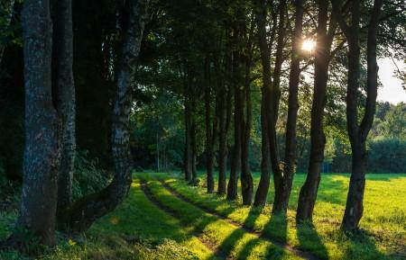 树木 田野 小路 绿色森林 夏天 太阳 4K风景高端电脑桌面壁纸