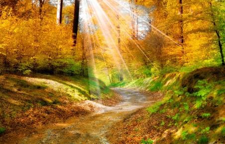 自然 金色秋天 阳光 树林 路 4K风景高端电脑桌面壁纸