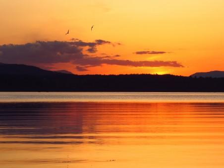 橙色的天空 鸟 湖 云 日落风景4K高端电脑桌面壁纸