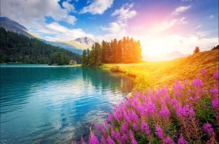 高山 树林 湖 鲜花 4K风景高端电脑桌面壁纸