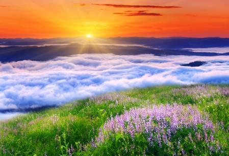 太阳 云 鲜花 自然 草 4K风景高端电脑桌面壁纸