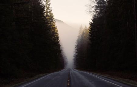 道路 森林 自然风景4K超高清壁纸精选