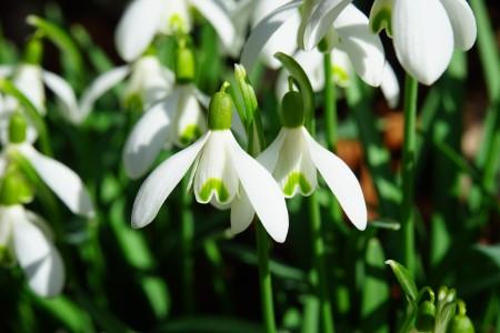 春天的花6k图片