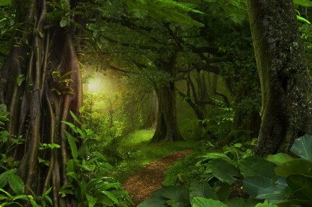 热带丛林 树叶 树 路 自然风景4K高端电脑桌面壁纸