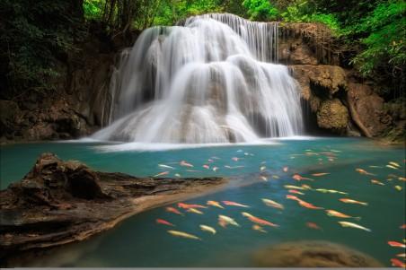 自然美丽的森林瀑布 树 鱼 4k高清风景图片高端电脑桌面壁纸
