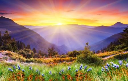 早上 花 树 山 自然 云杉 草地 杂草 太阳 日出 5k风景高端电脑桌面壁纸