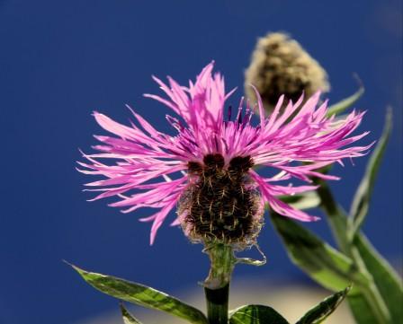 粉红色的花4k图片