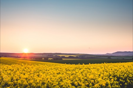 美丽的日落 黄色的油菜花风景4k高端电脑桌面壁纸