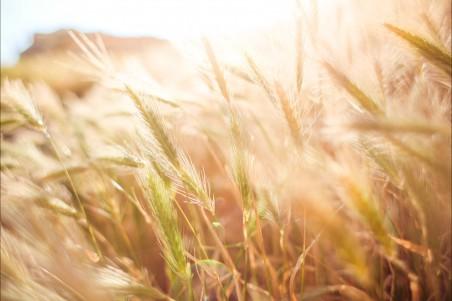 麦田4k风景图片