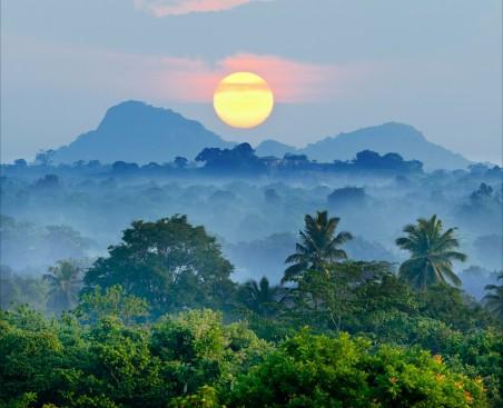 森林 阳光 树木 山 棕榈树 黎明 4K风景高端电脑桌面壁纸
