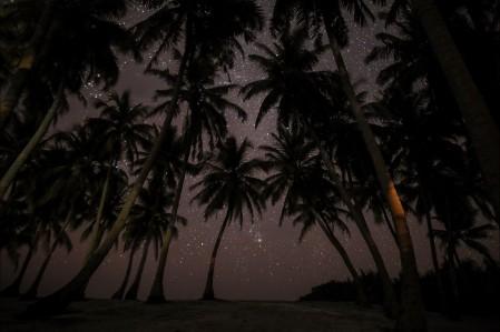 马尔代夫 椰树 夜晚 星空风景5K图片
