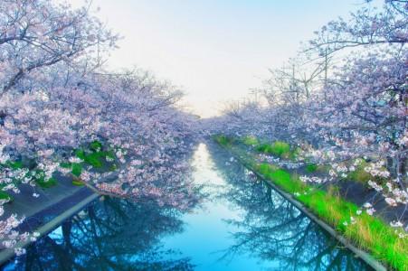 河岸边的花6k风景摄影图片
