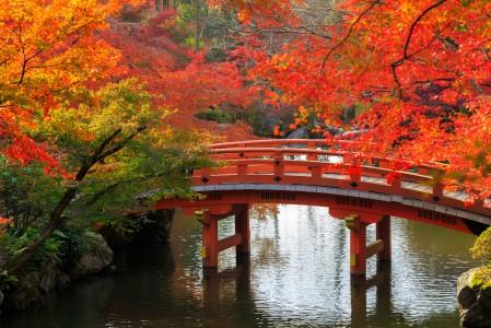 秋天 树 桥 池塘 公园 日本京都风景4K图片