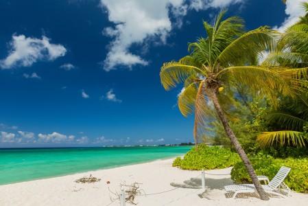 夏季海滩海边棕榈树风景4K超高清壁纸推荐