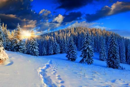 自然 冬天 树林 雪 脚印 天空 4K风景高端电脑桌面壁纸图片