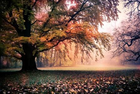秋天 金色的树 7K风景高端电脑桌面壁纸