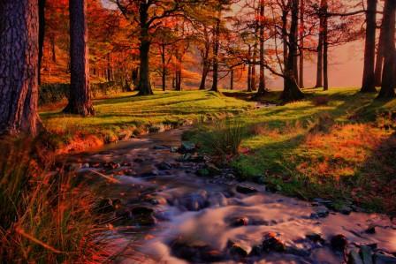 自然风景 日落 森林 小溪流水 4K风景高端电脑桌面壁纸图片