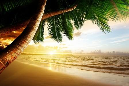 海滩椰树风景4K高清风景高端电脑桌面壁纸