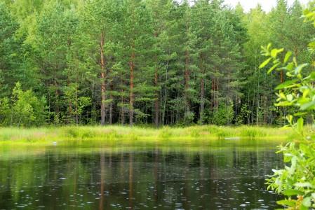森林 草 树木 湖泊 4K风景高端电脑桌面壁纸
