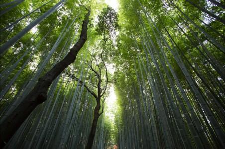 绿色竹子,竹林,树木,树干,竹海风景图片
