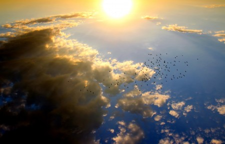 日落 鸟 云 太阳- 天空 5K风景图片