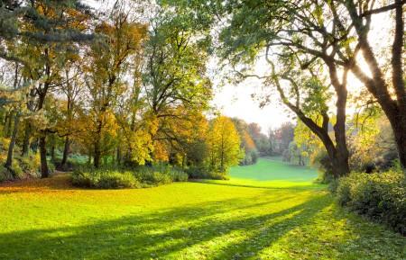秋天的公园 太阳 树林 草地 4K风景高端电脑桌面壁纸