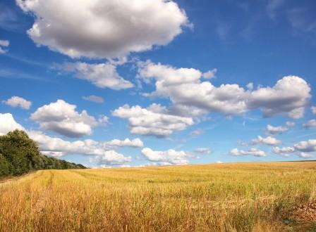 农场 道路 树木 天空 白云 4K风景高端电脑桌面壁纸