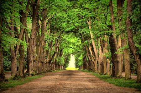 自然 绿色 环保公路 道路 树木 风景 4K高端电脑桌面壁纸