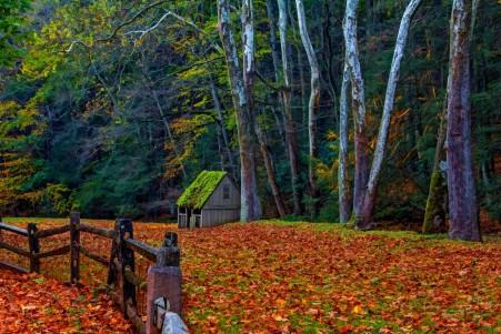 自然森林公园树 栅栏 秋天风景4K图片