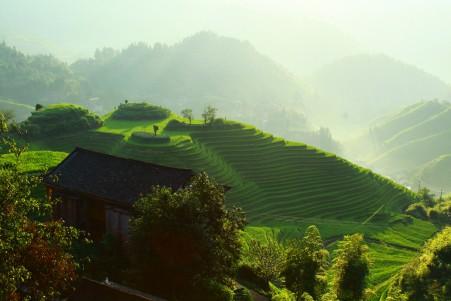 茂盛的梯田风景5k图片