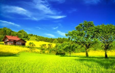 树 天空 房子 4K风景图片