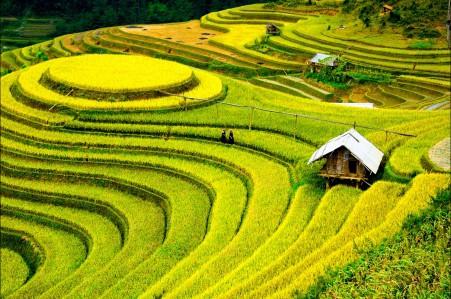 梯田水稻种植园4K风景高端电脑桌面壁纸图片