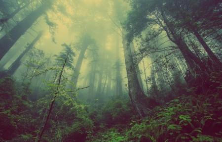 梦幻森林4K风景高端电脑桌面壁纸