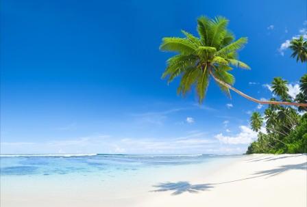 蓝色天空 海水 热带 棕榈树 美丽的海边风景5K高端电脑桌面壁纸