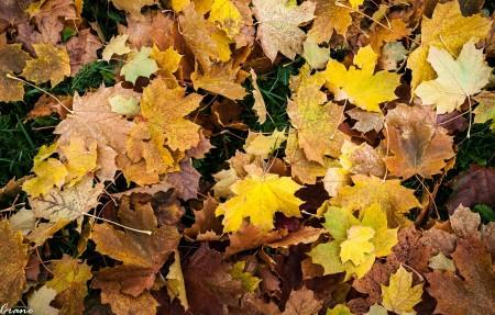 秋天地上的枫树叶4k高清超高清壁纸精选