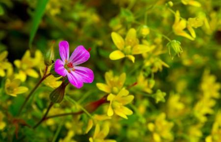 粉色的和黄色的鲜花 土耳其风景4k图片