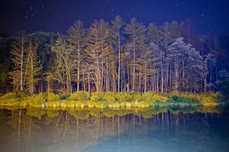 夜星光 天空 树木 4k风景超高清壁纸精选
