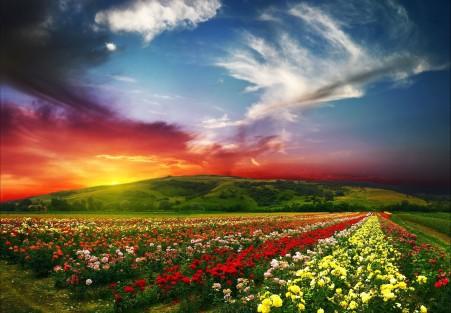 天空 山 鲜花 5K风景图片
