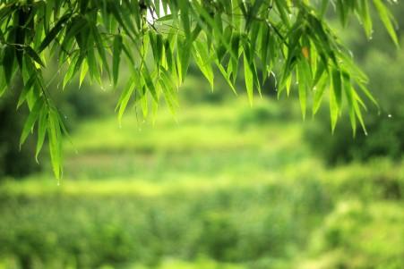 风景 竹 竹叶 5k高清高端电脑桌面壁纸