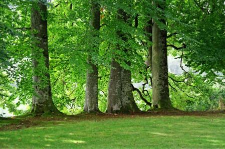 绿色 树木 草地 格罗夫的树木 4K风景超高清壁纸推荐