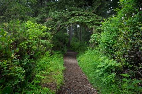 森林 树木 绿树叶 4K风景图片