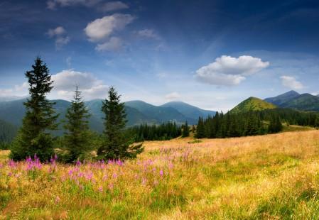 山 鲜花 杉木树 天空 云 5K风景高端电脑桌面壁纸