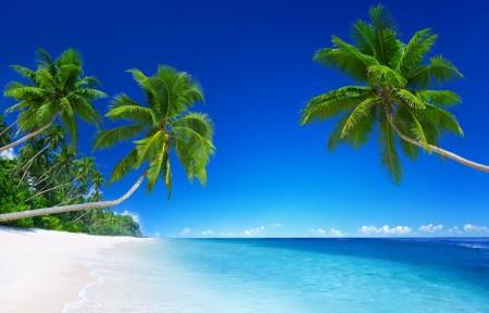 蓝色大海 天空 热带海洋 沙滩 棕榈树 5K风景高端电脑桌面壁纸