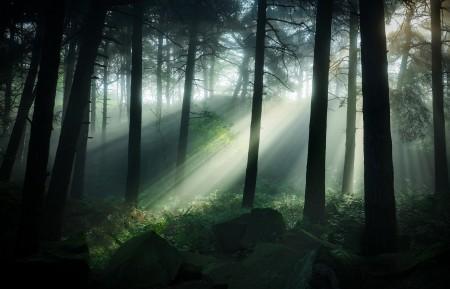 穿透森林的阳光4K风景高端电脑桌面壁纸