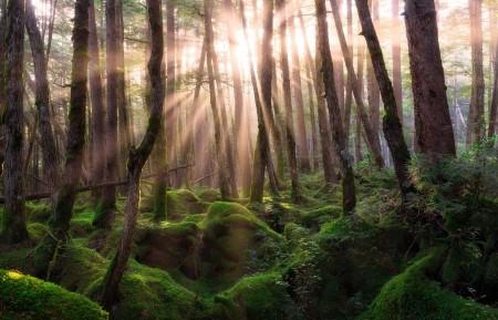 松林日出高清4k风景桌面高端电脑桌面壁纸