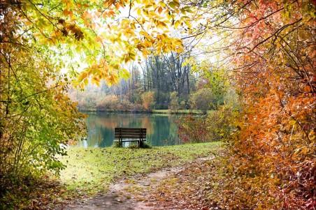 秋天的树叶 树林 河流 小路 长椅 秋天背景 自然风景4K高端电脑桌面壁纸