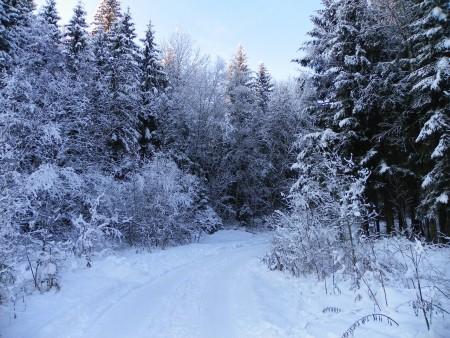 冬季道路转弯4K风景图片高端电脑桌面壁纸