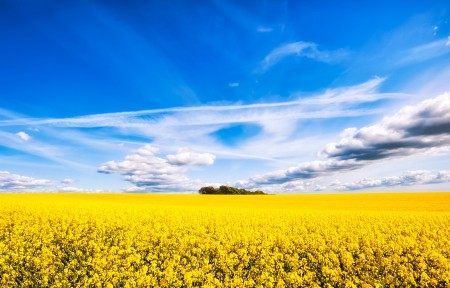 油菜花的天空4k风景高清图片